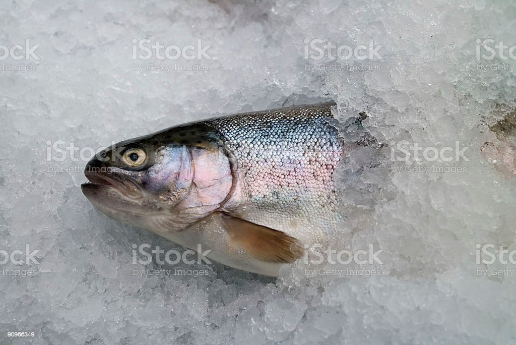 trout female stock photo