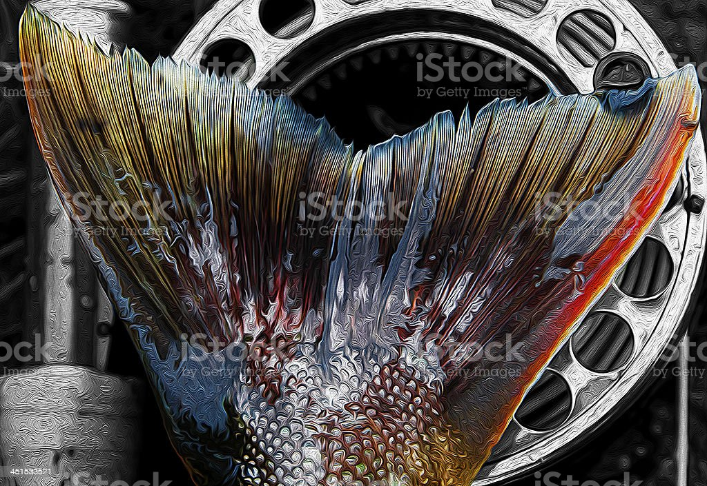 Trout  fin royalty-free stock photo