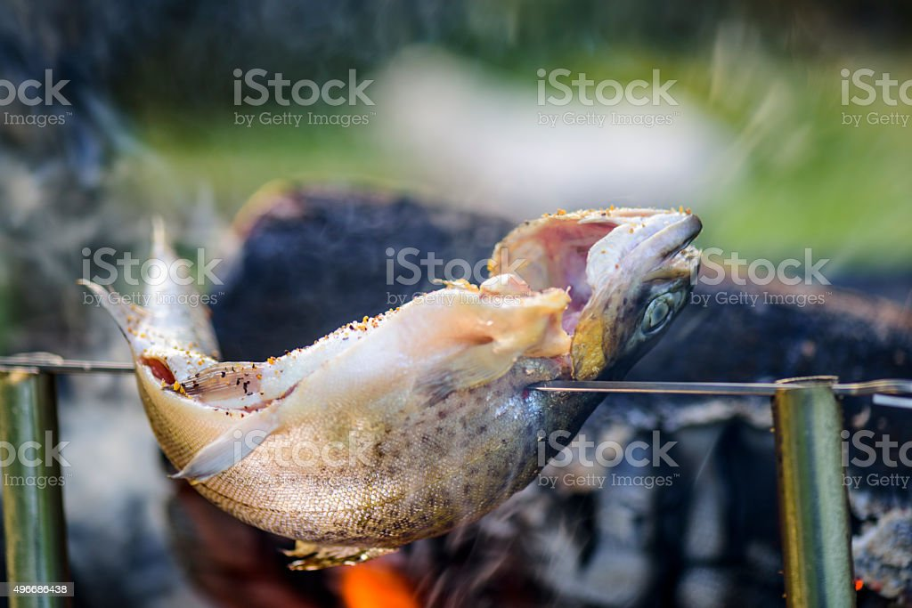 Trout fish at the camp fire stock photo