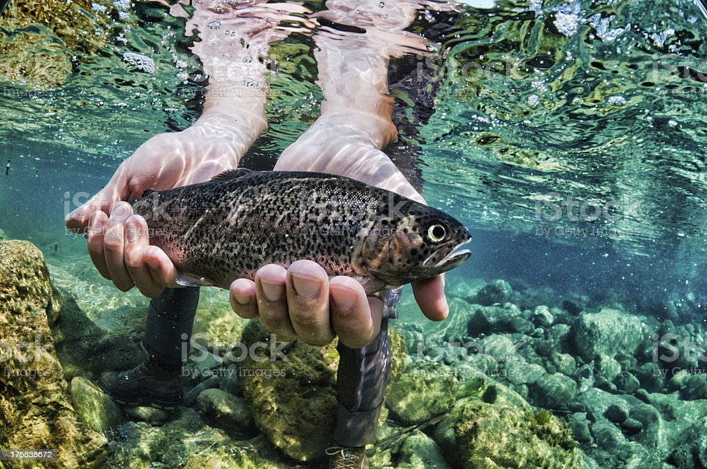Trout fish stock photo
