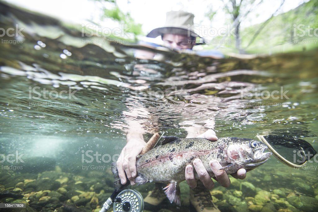 Trout fish underwater royalty-free stock photo