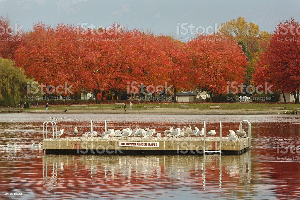 Trout Lake, John Hendry Park, Vancouver stock photo