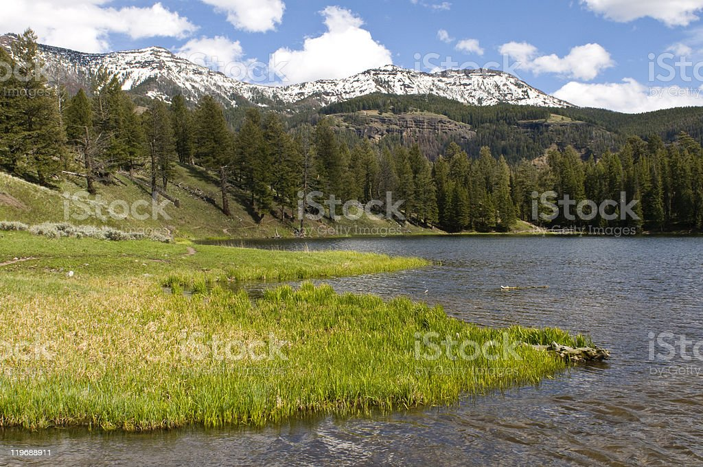 Trout Lake, Yellowstone stock photo