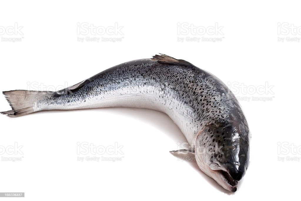 trout on a white background stock photo