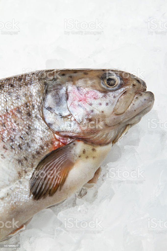 Trout on ice stock photo