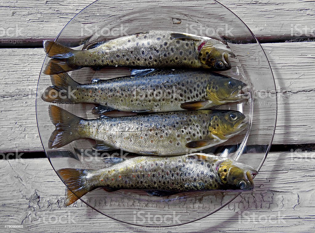 trout on plate royalty-free stock photo