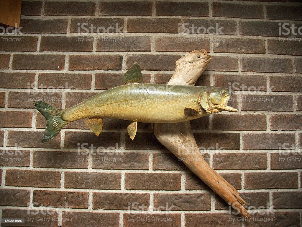 Trout stock photo
