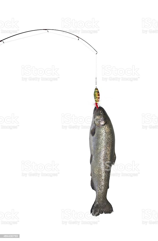 trout royalty-free stock photo