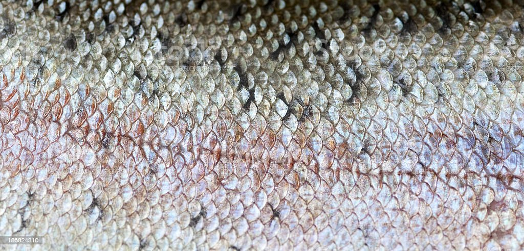 Trout Skin royalty-free stock photo
