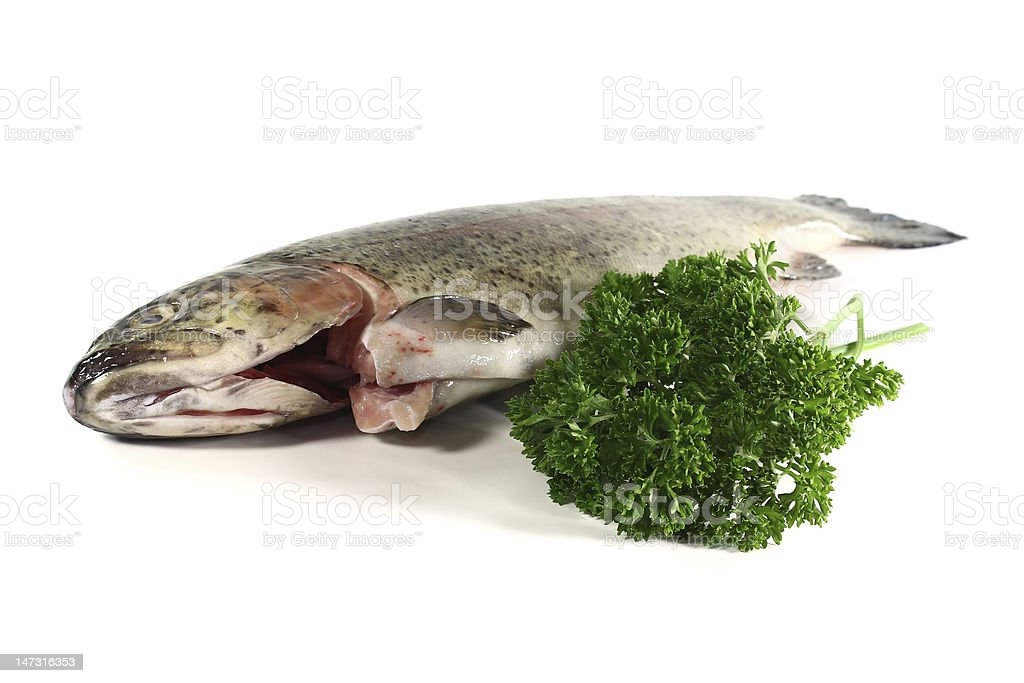 Trout with parsley royalty-free stock photo
