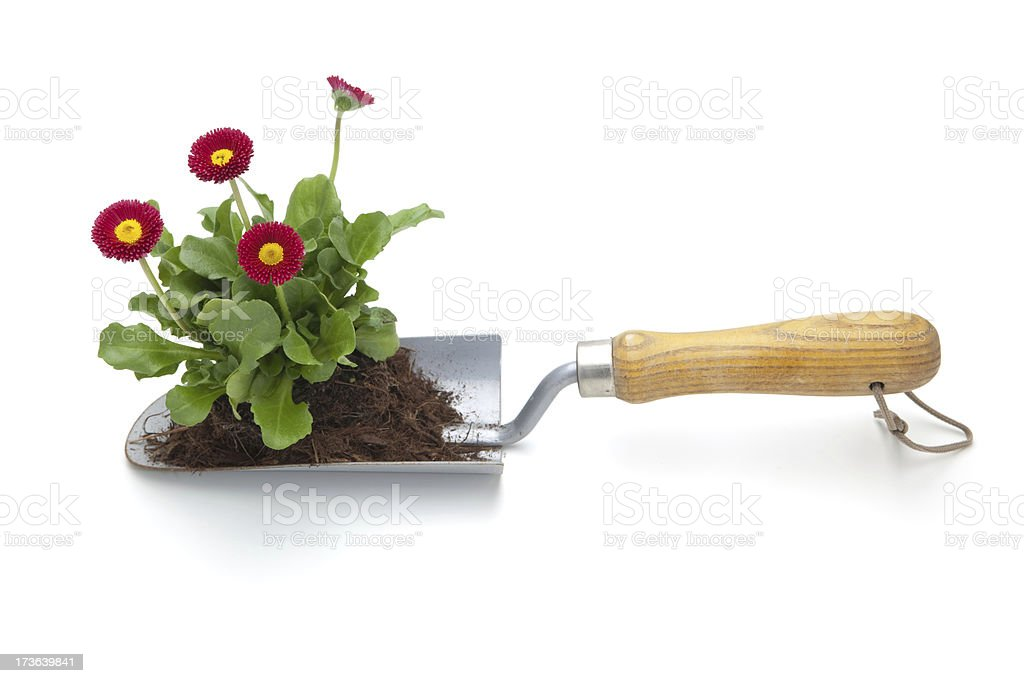Trowel with Plant and Soil royalty-free stock photo