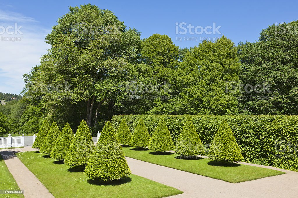 Trrimmed trees royalty-free stock photo