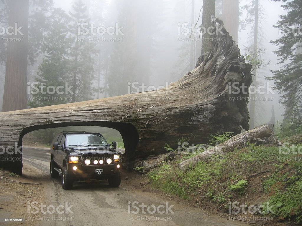 Truck Driving through Tree royalty-free stock photo