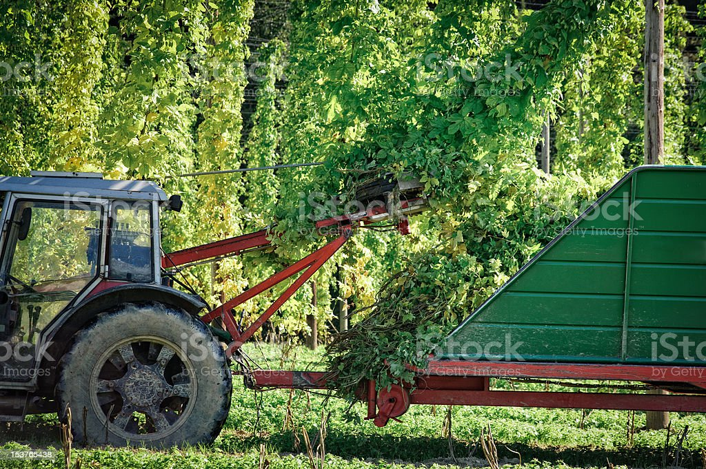 Truck harvesting the Hop royalty-free stock photo