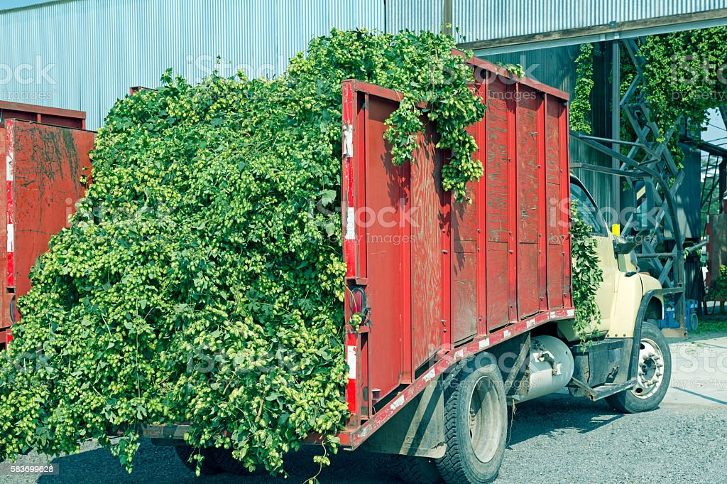 Truck loaded with hops at processing plant in Yakima Valley stock photo