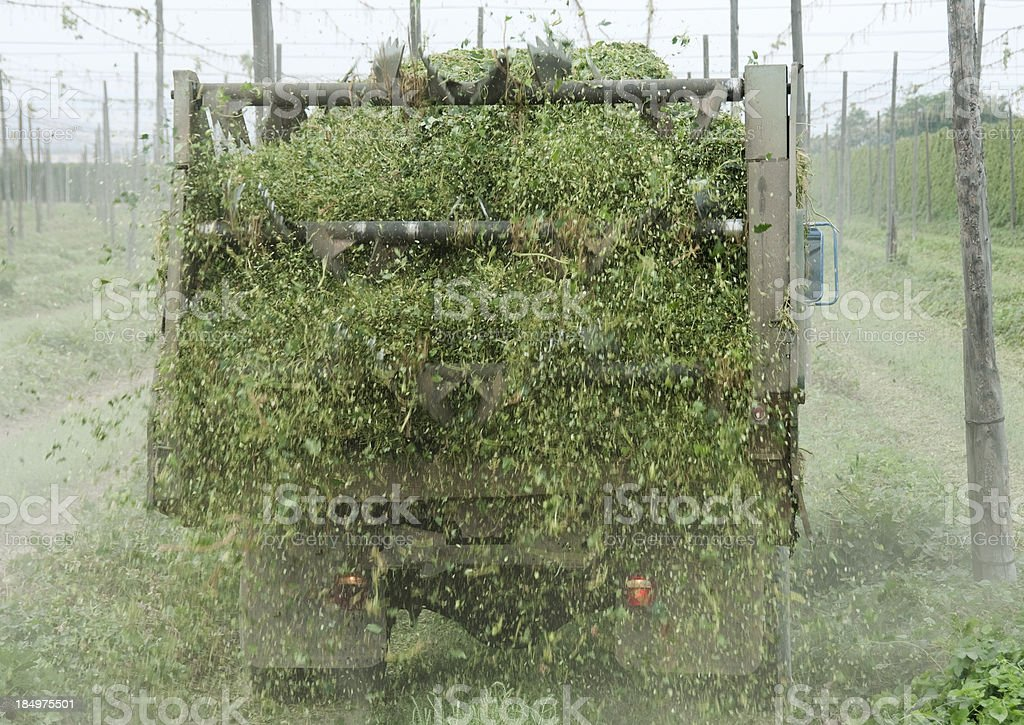 Truck spreading hop leaves and stems onto field stock photo