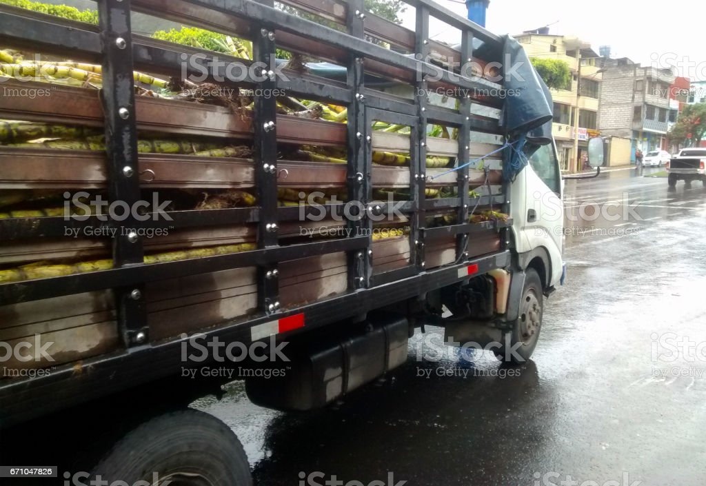 A truck transporting sugar cane stock photo