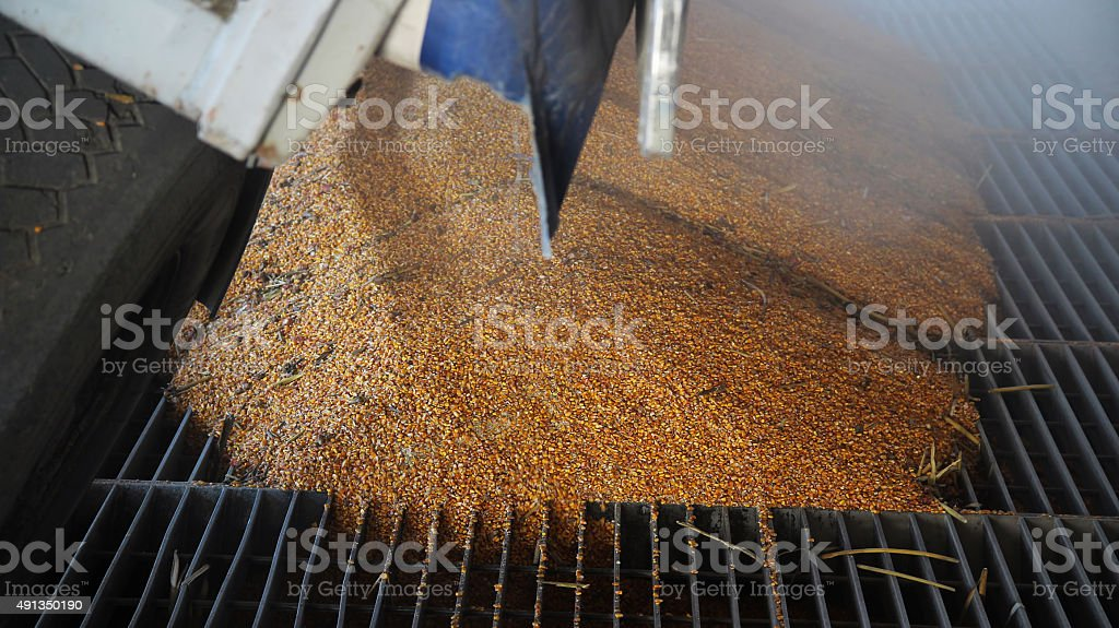 Truck Unloading Grain stock photo