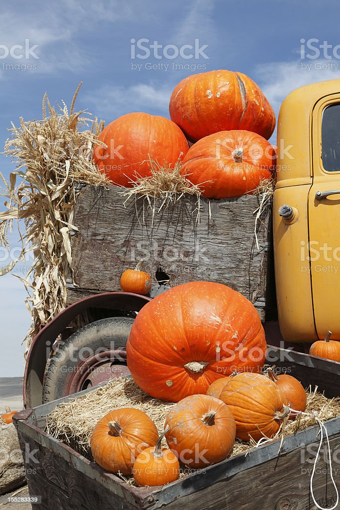 Truckload Of Bright Orange Pumpkins stock photo