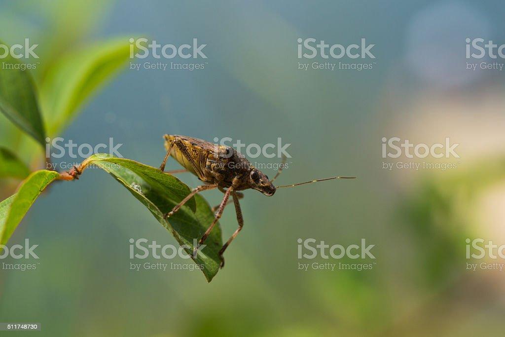 True bug close-up stock photo