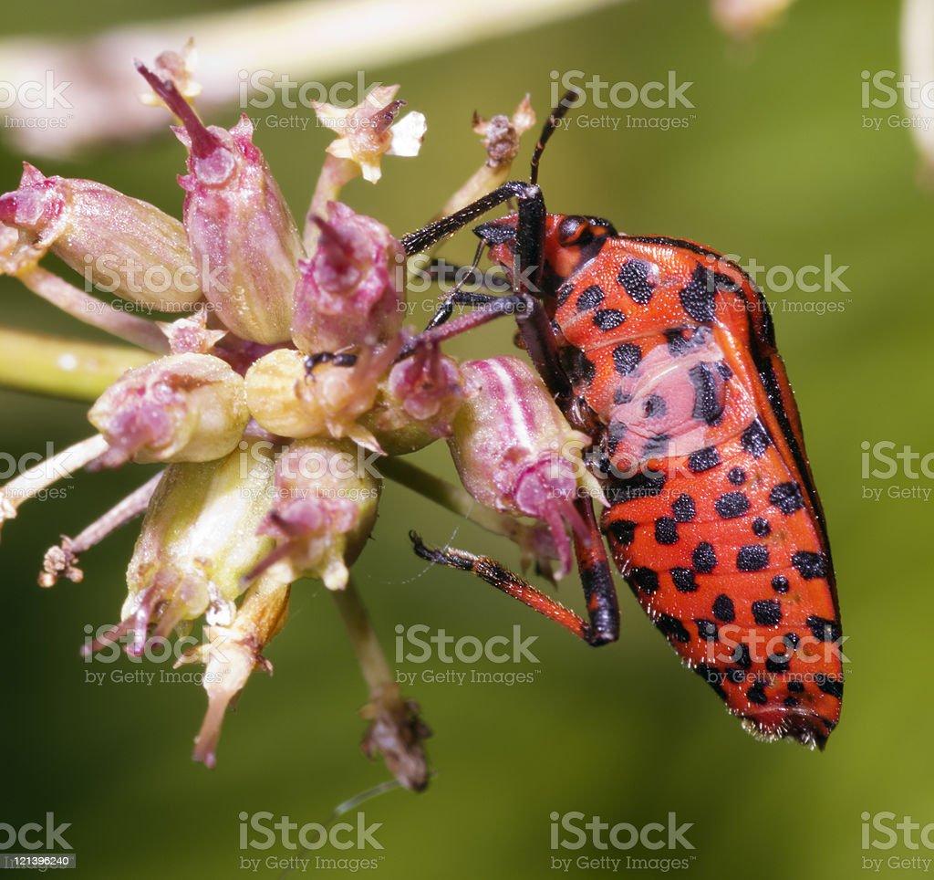 True bug profile stock photo