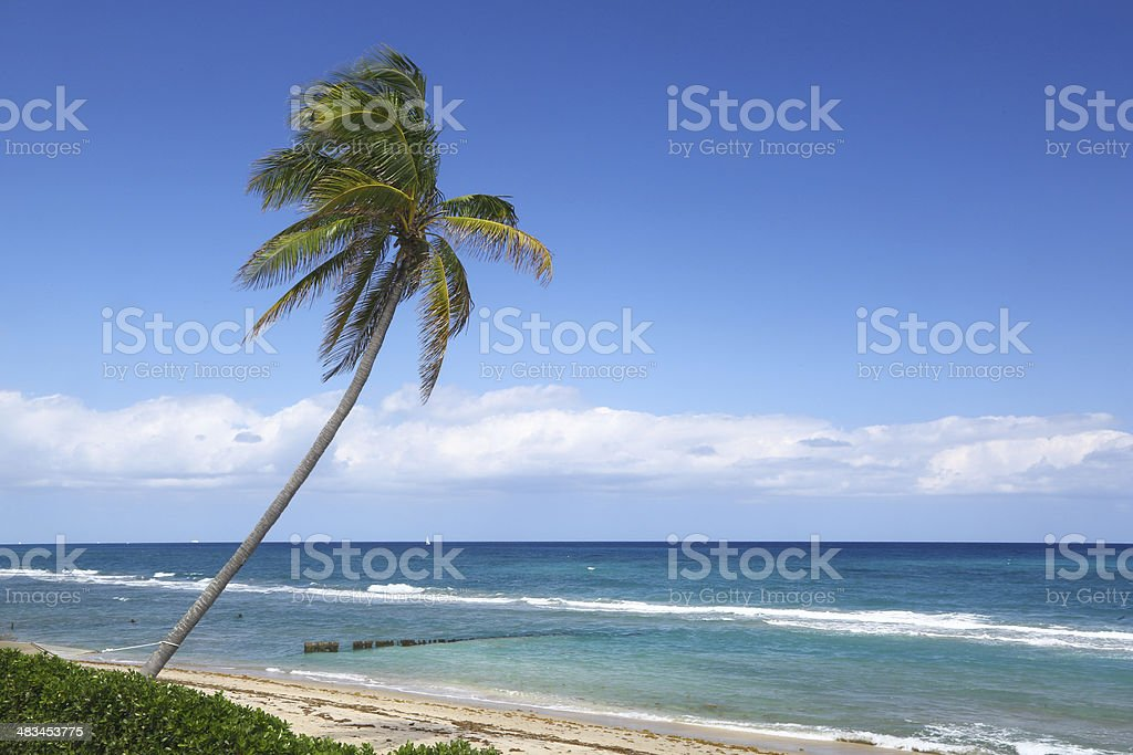 Truly Palm Beach stock photo