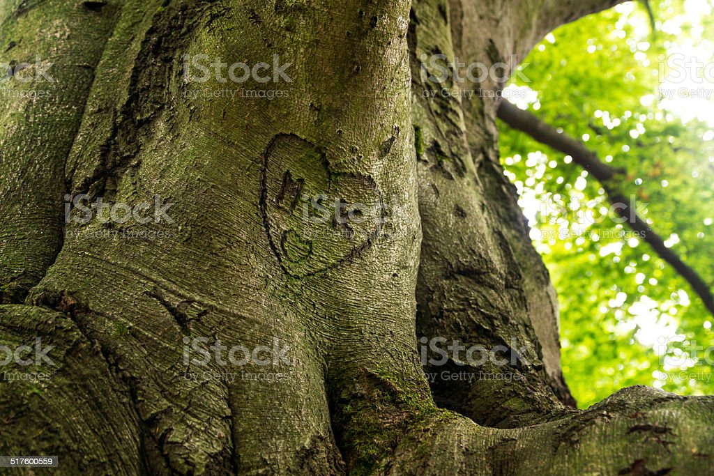 trunk engraved with hearts and initials stock photo