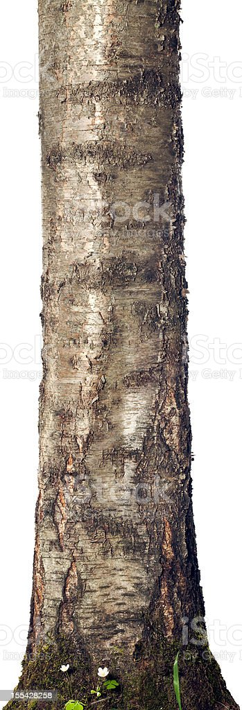 Trunk isolated on a white background stock photo