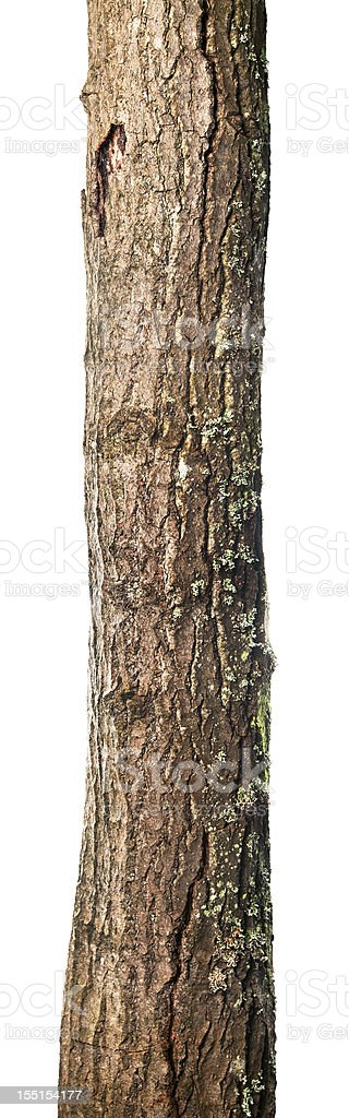 Trunk isolated stock photo