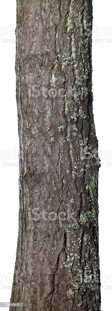 Trunk isolated royalty-free stock photo