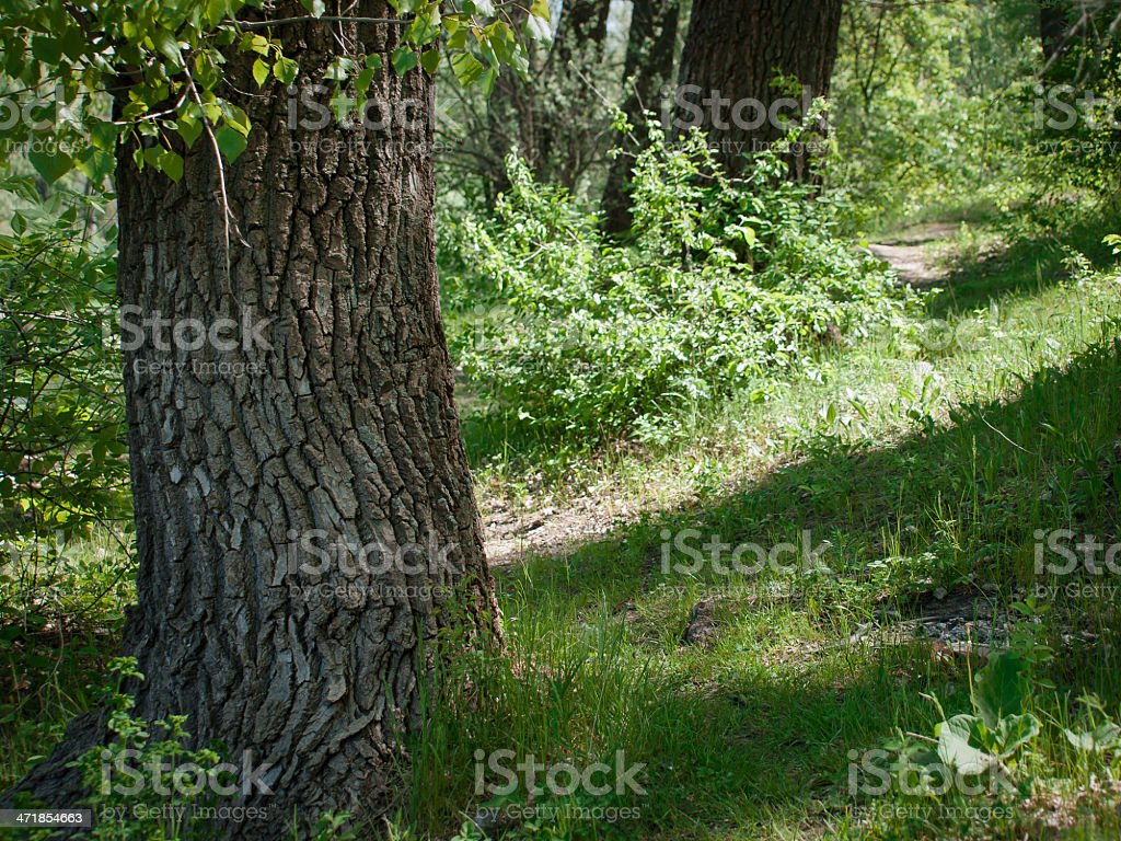 Trunk of an old tree covered with a lichen royalty-free stock photo