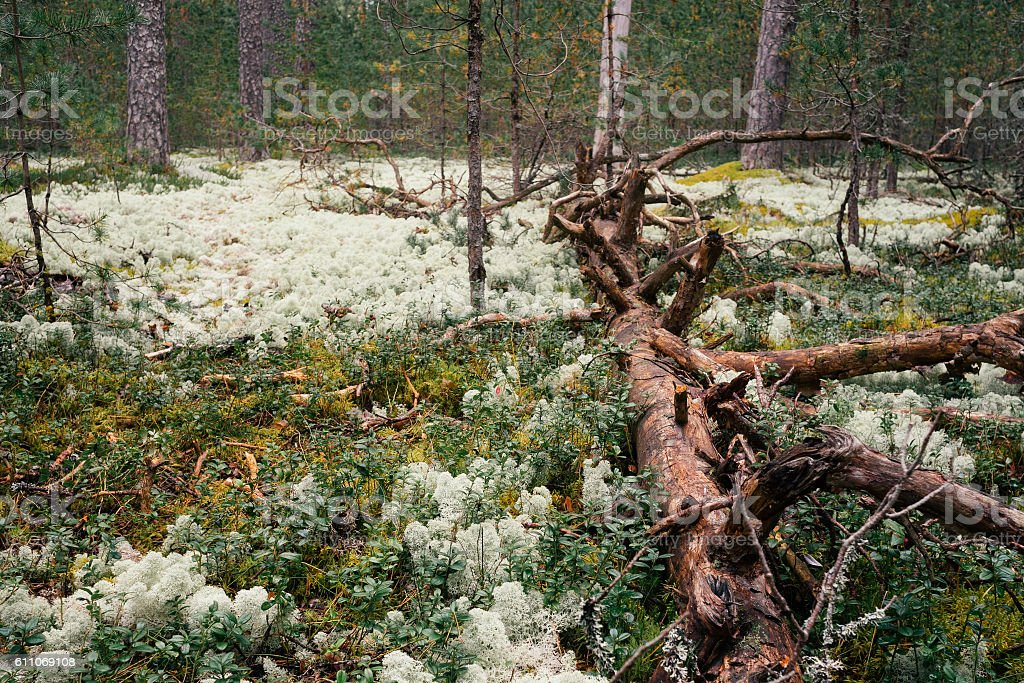 Trunk of fallen tree in forest stock photo