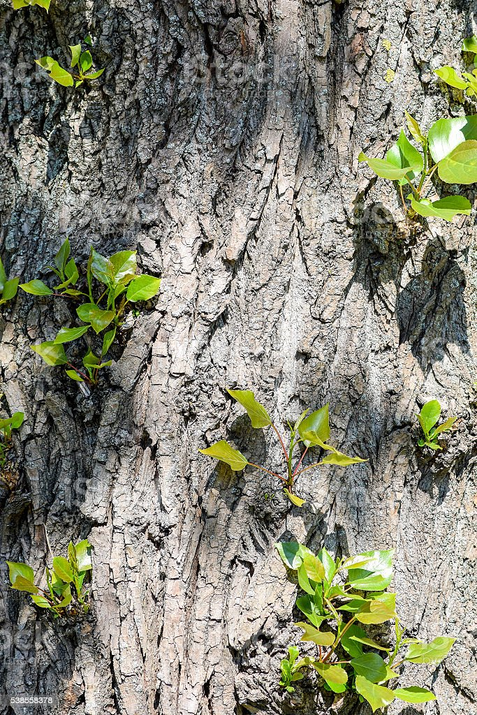 Trunk of the tree with young shoots stock photo