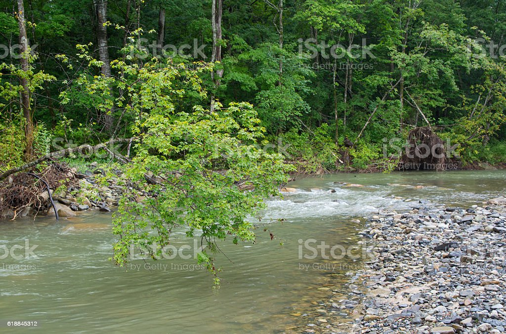 Trunk of tree above water stream. stock photo
