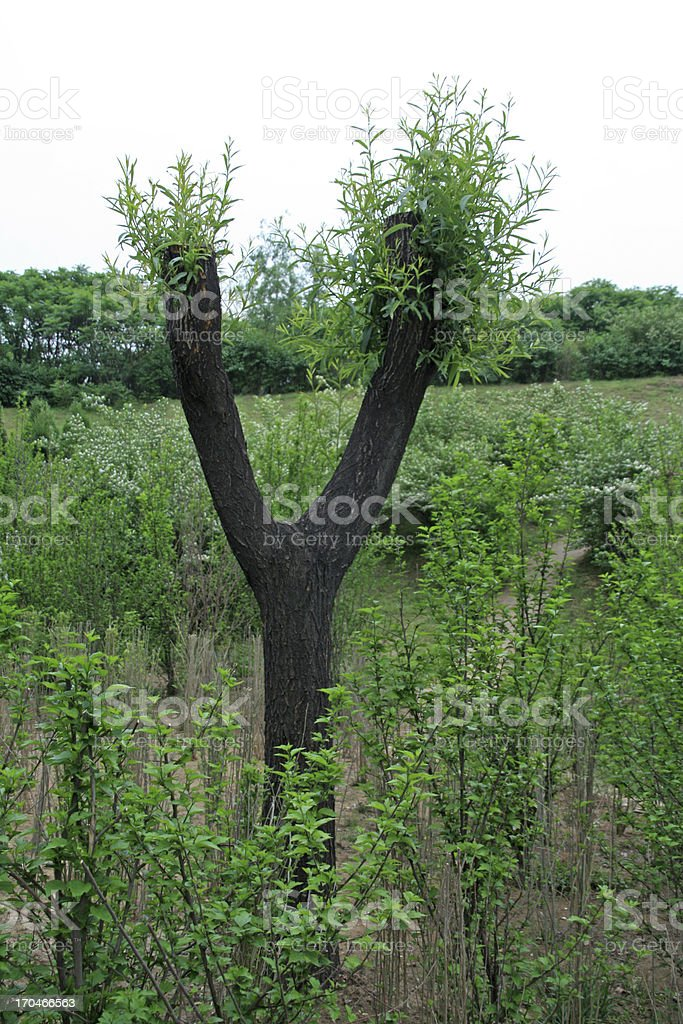 trunk shape stock photo