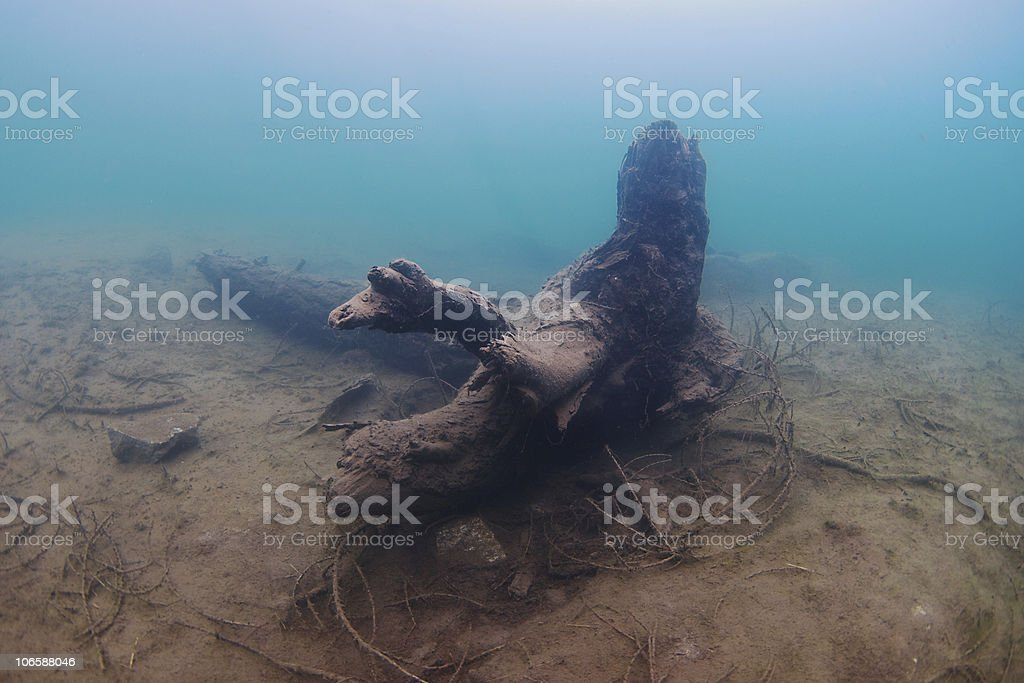 trunk underwater royalty-free stock photo