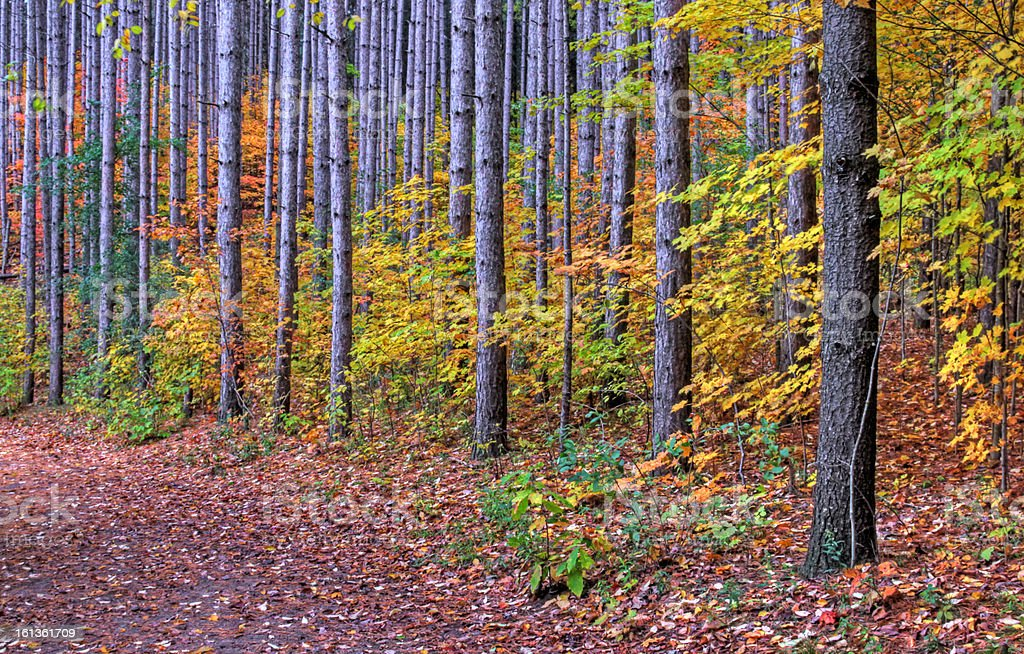 Trunks in Autumn royalty-free stock photo