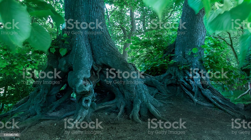 Trunks of trees in a fairy tale wood stock photo