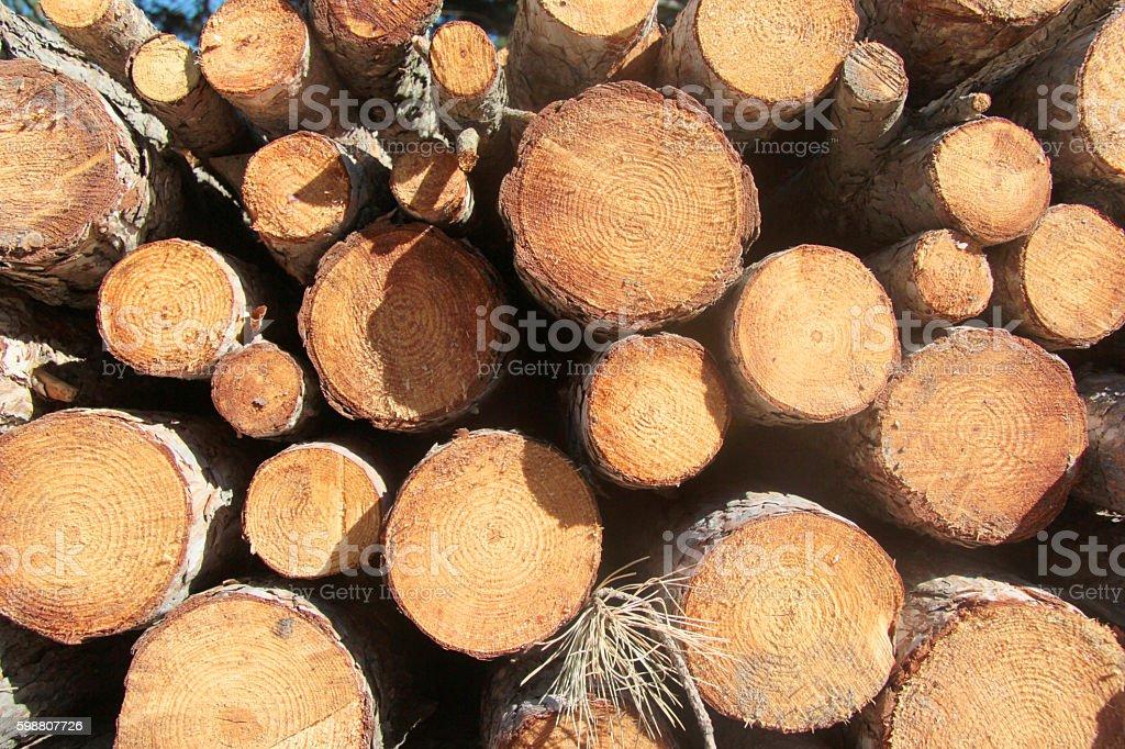 trunks stock photo