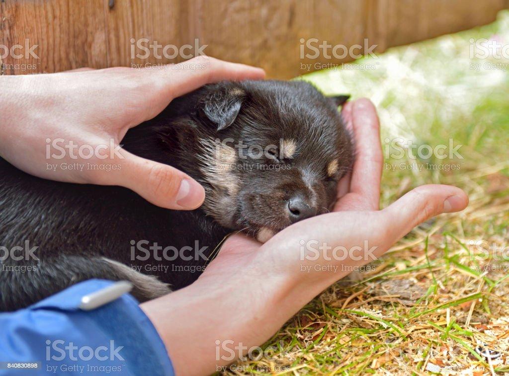 Trust. Monthly puppy sleeps on palm stock photo