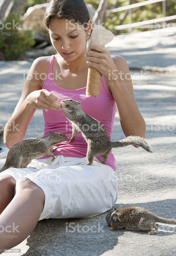 Trusting Squirrels, Yosemite National Park (XXXL) royalty-free stock photo