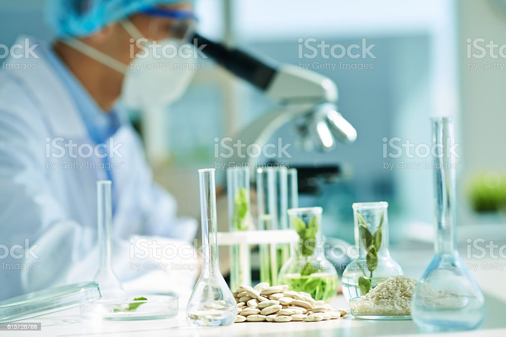 ts in flasks, lima beans and rice on lab table, scientist stock photo