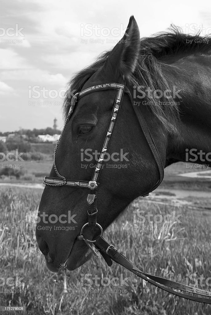 T?te de cheval noir stock photo