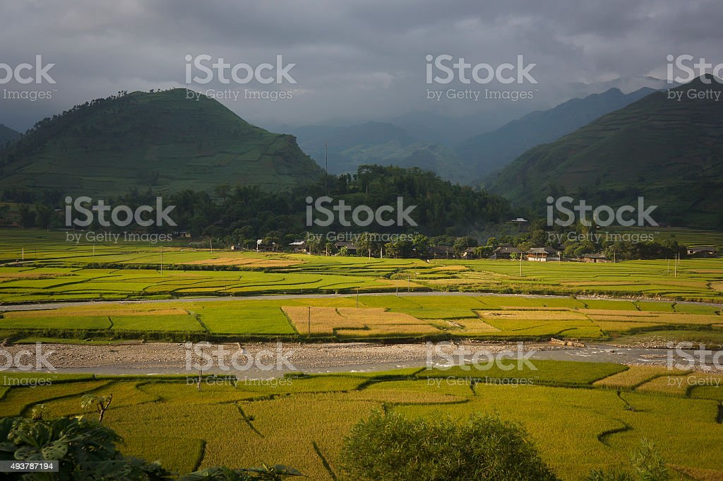 Tu Le vally rice field on the harvest season stock photo
