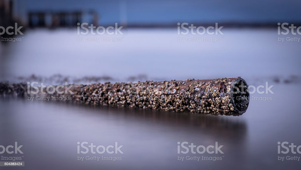 Tube covered with shells stock photo