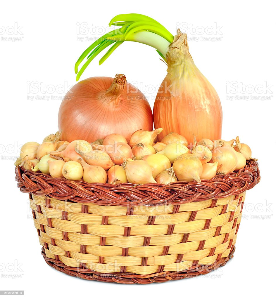 tuber onion in a wicker basket stock photo