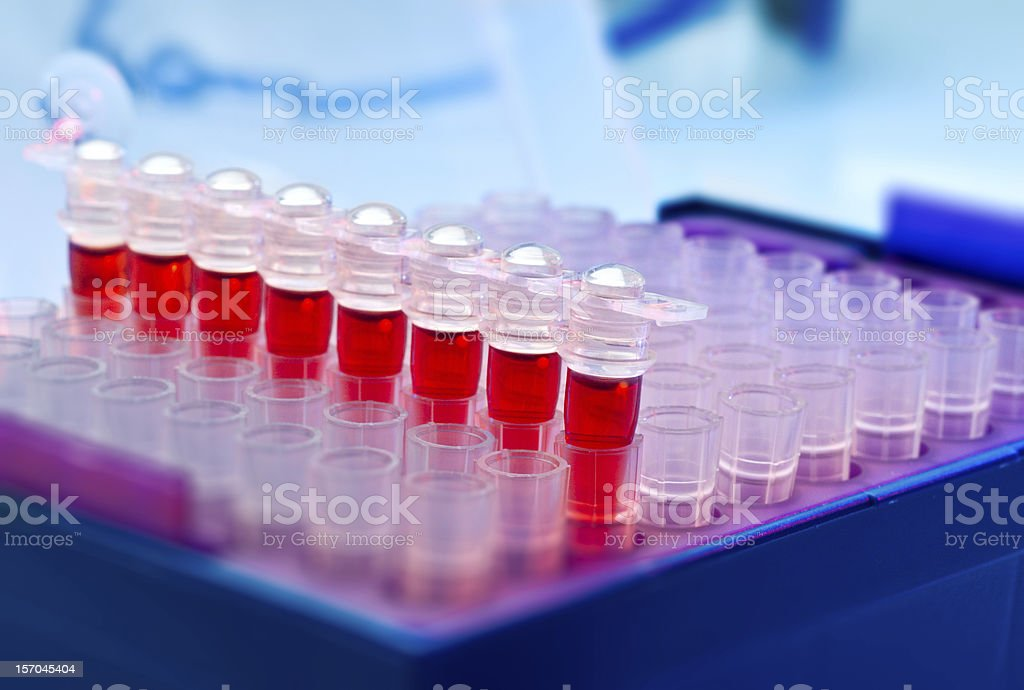 Tubes for amplification of DNA stock photo