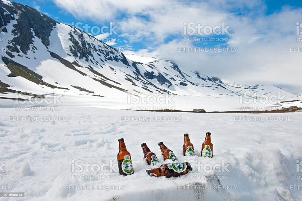 Tuborg green beer bottles cooling in snow stock photo