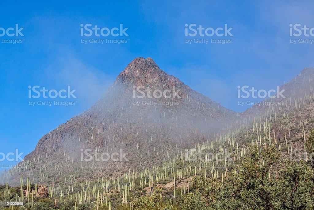 Tucson Mountain Park Landscape in Fog stock photo