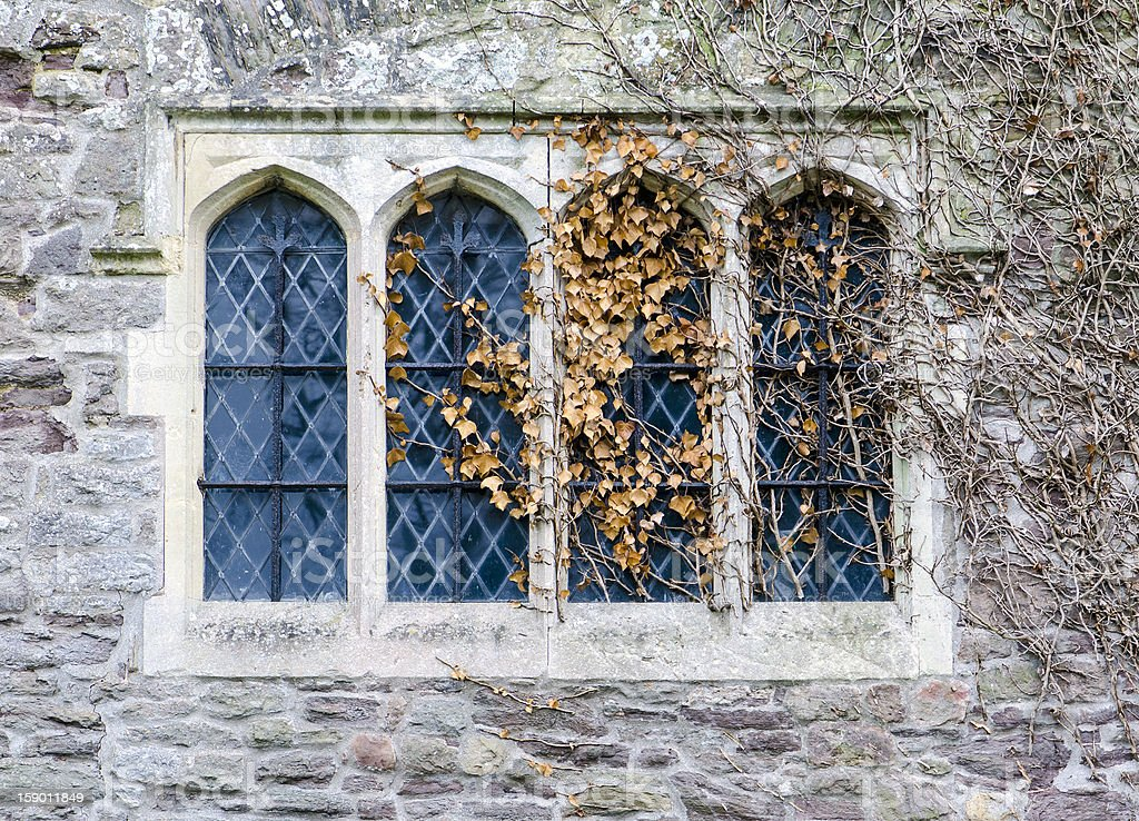 tudor window with dead ivy royalty-free stock photo